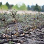 Zalesňovanie kvôli klimatickej zmene si vyberie svoju daň. Podľa aktivistov prinesie hlad ďalším ľuďom