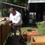 Na Slovensku je málo včiel i  kvalitného medu. Posledné roky čelia včelári mnohým problémom